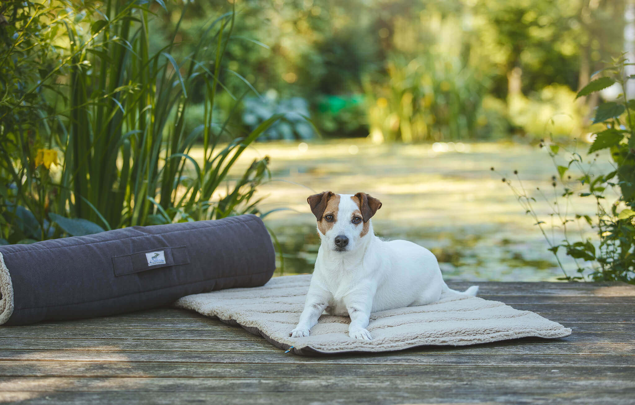 Charakter Russell Terrier