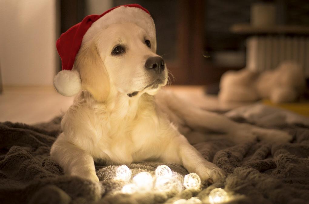 Möchtet ihr euren Hund zu Weihnachten mit einem kuscheligen