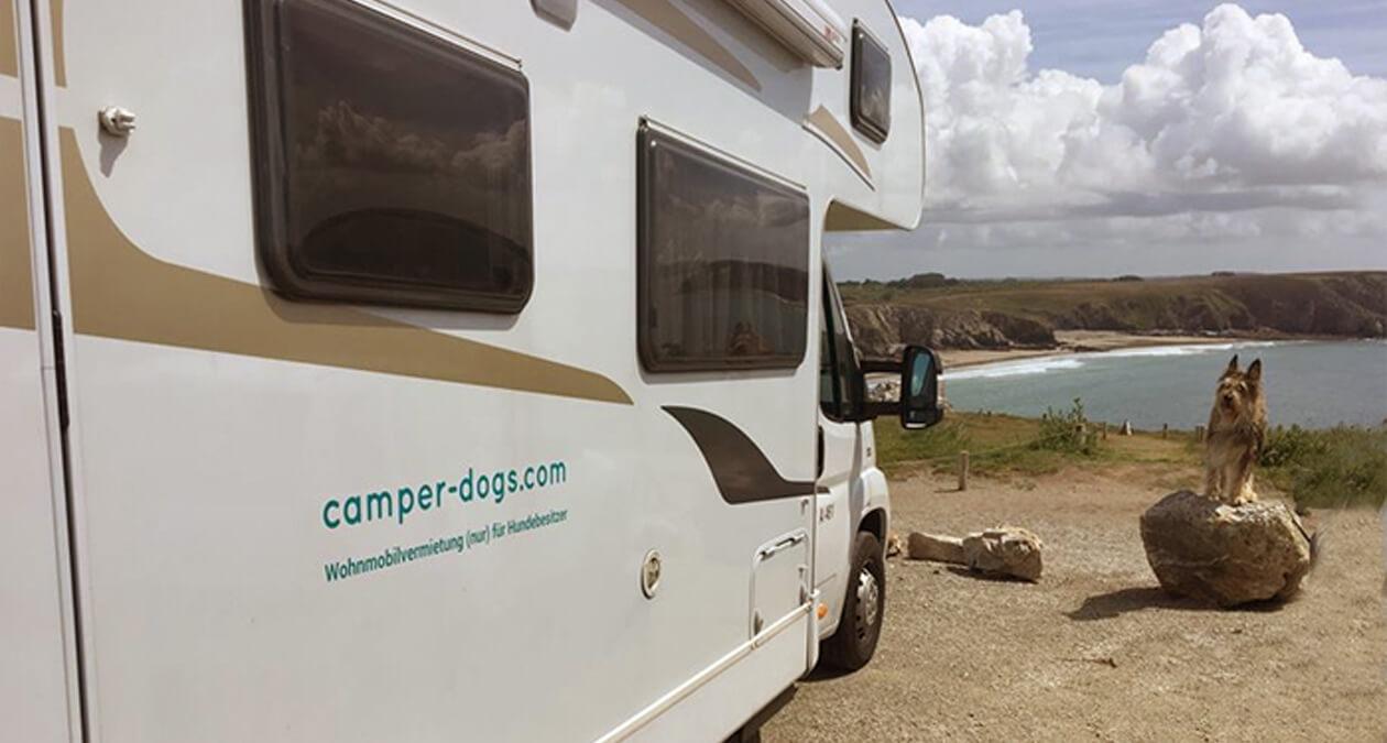 Camping mit Hund: Tipps & Tricks von SABRO  SABRO
