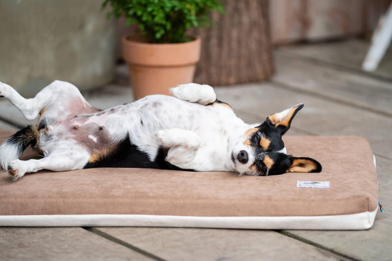 Dein Hund hechelt nachts? Das kannst du tun