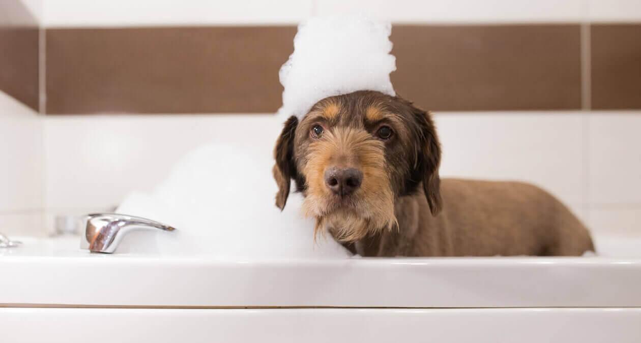 Hund-baden-so-gehts