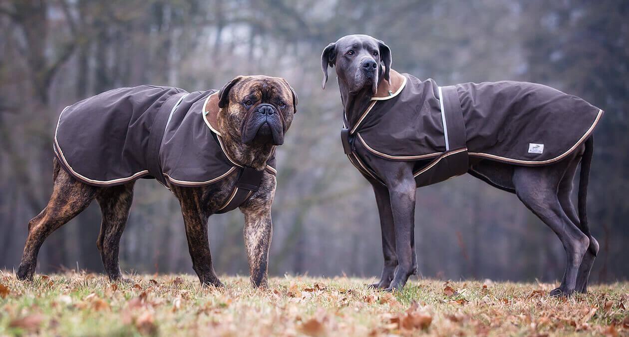 Hundebekleidung gegen Frieren
