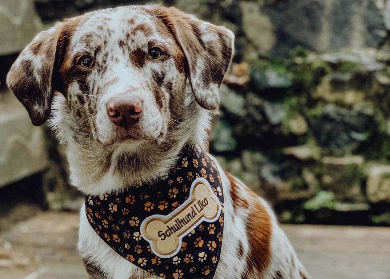 Infos über Schulhunde