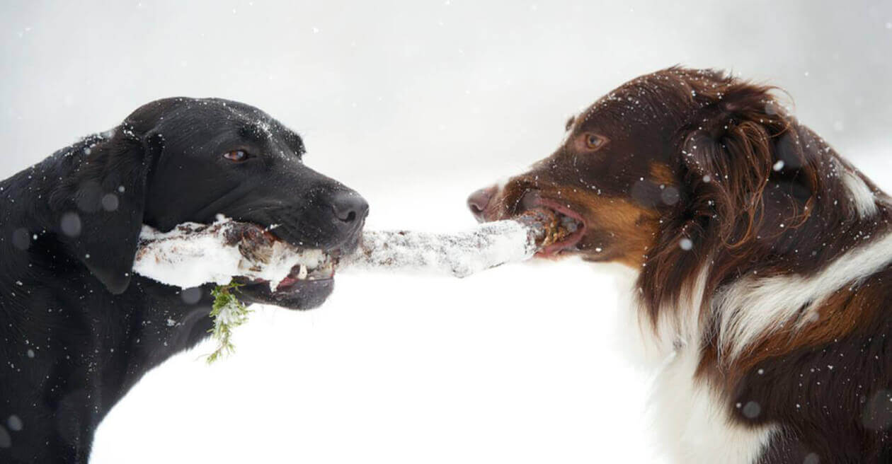 Tipps für Hunde bei Schnee & Kälte