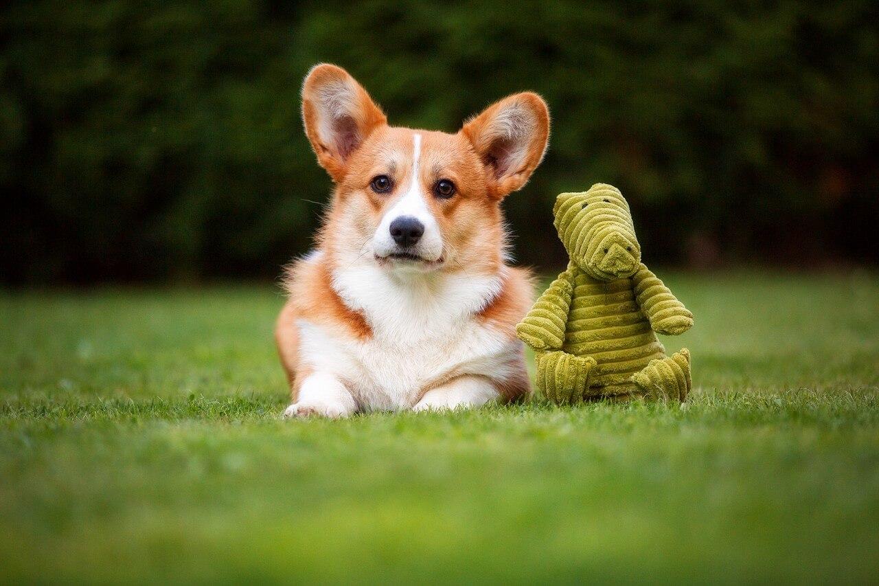 Spieltier Krokodil Emil