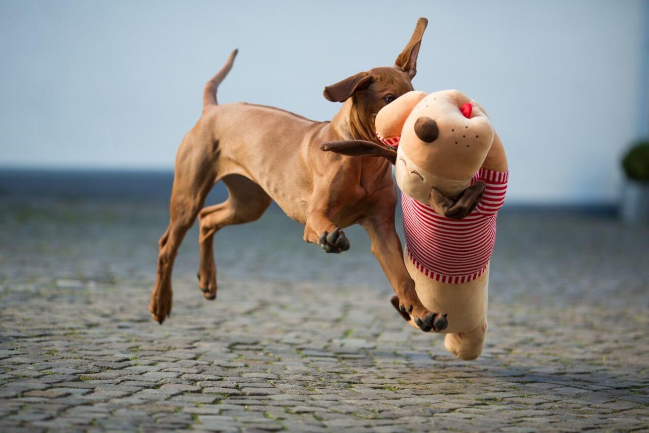 Ankuschelhund Tomte
