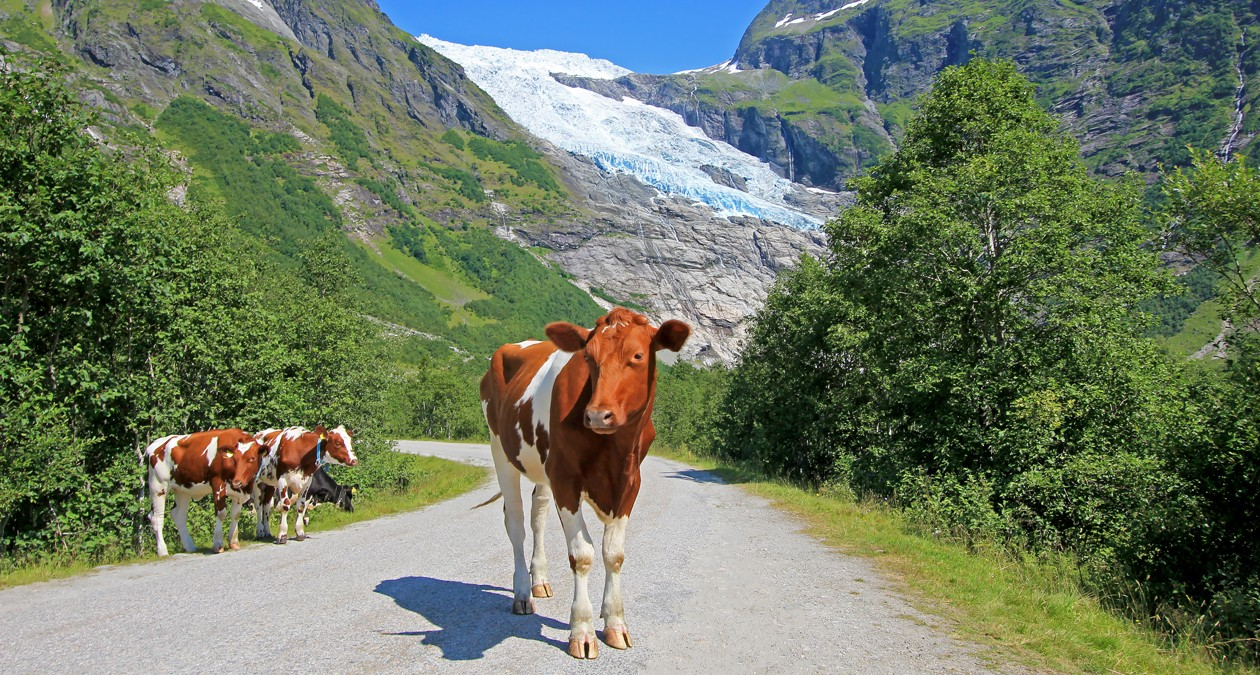 Fleisch_aus_Norwegen