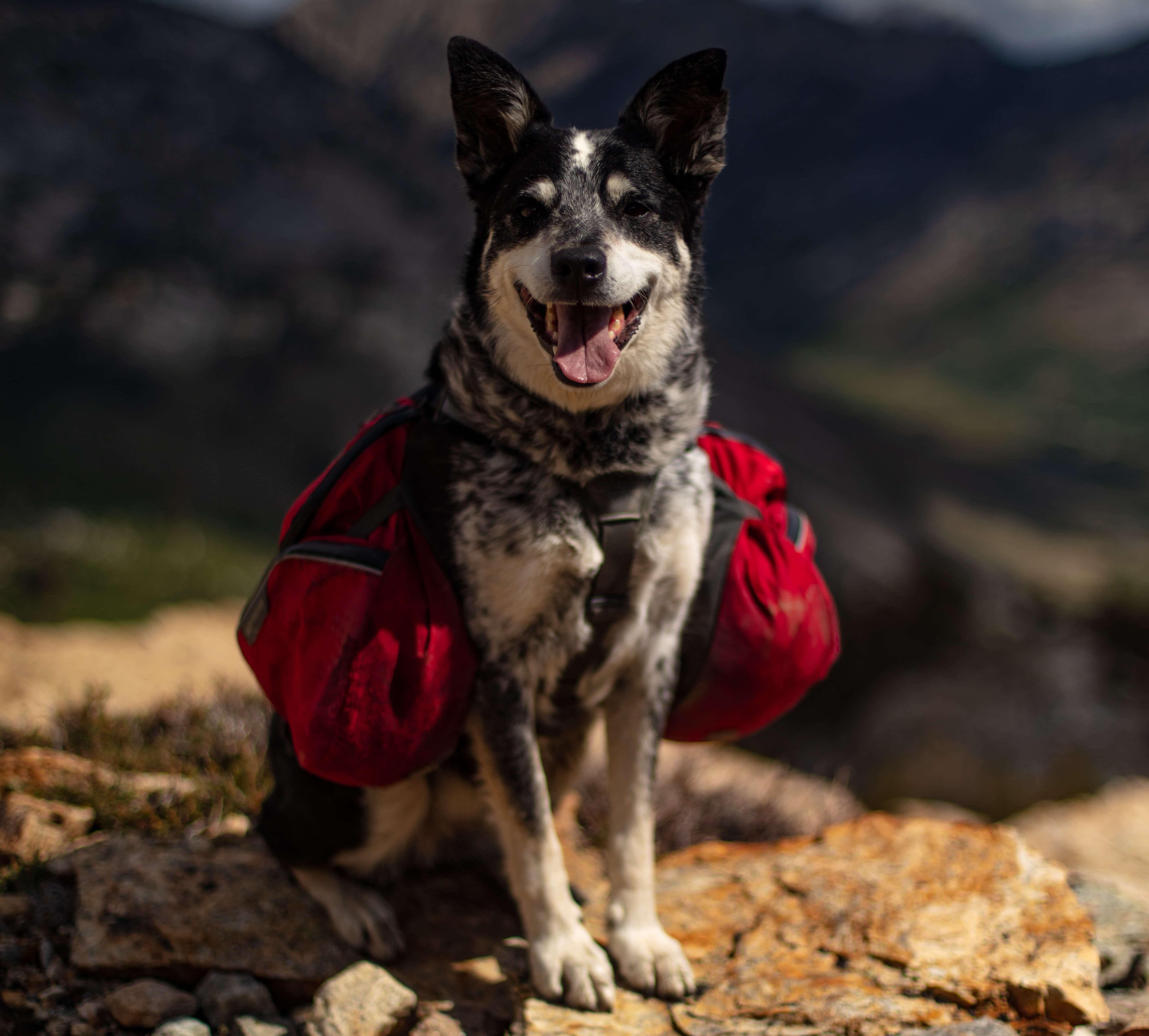 Wandern mit Hund Ausrüstung