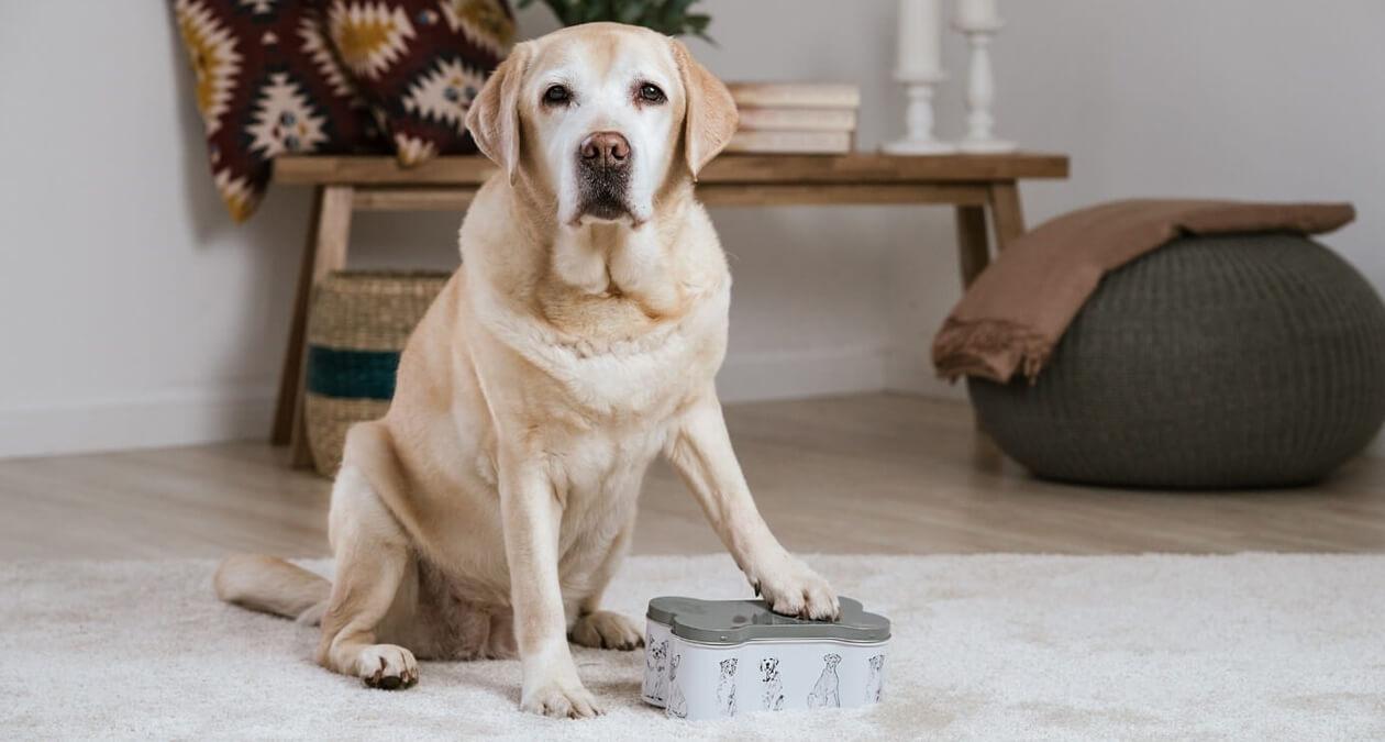 Alte Hunde gesund ernähren