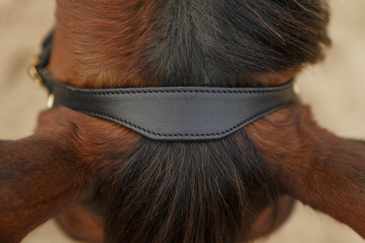 Kopfstück Kappzaum Naseneisen