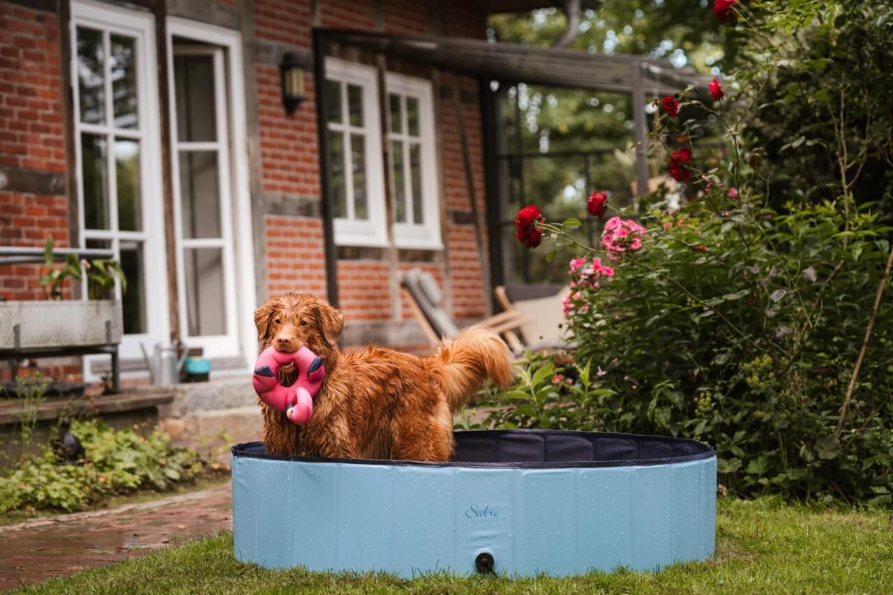 Liten sjö Hundepool