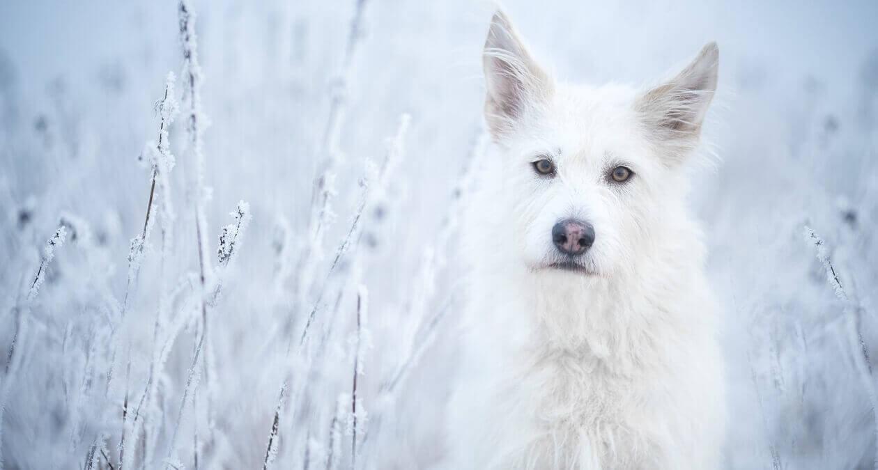 SABRO_Hund_im_Schnee_2