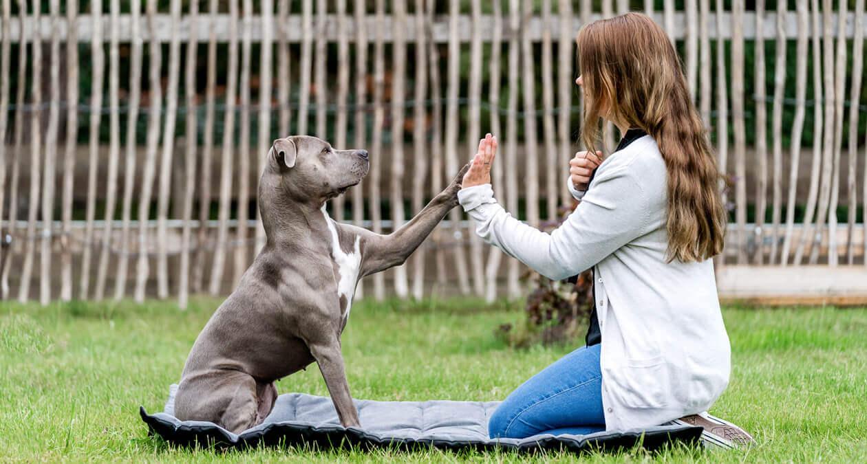 Ob ein Hund einziehen soll, muss mit der ganzen Familie besprochen werden