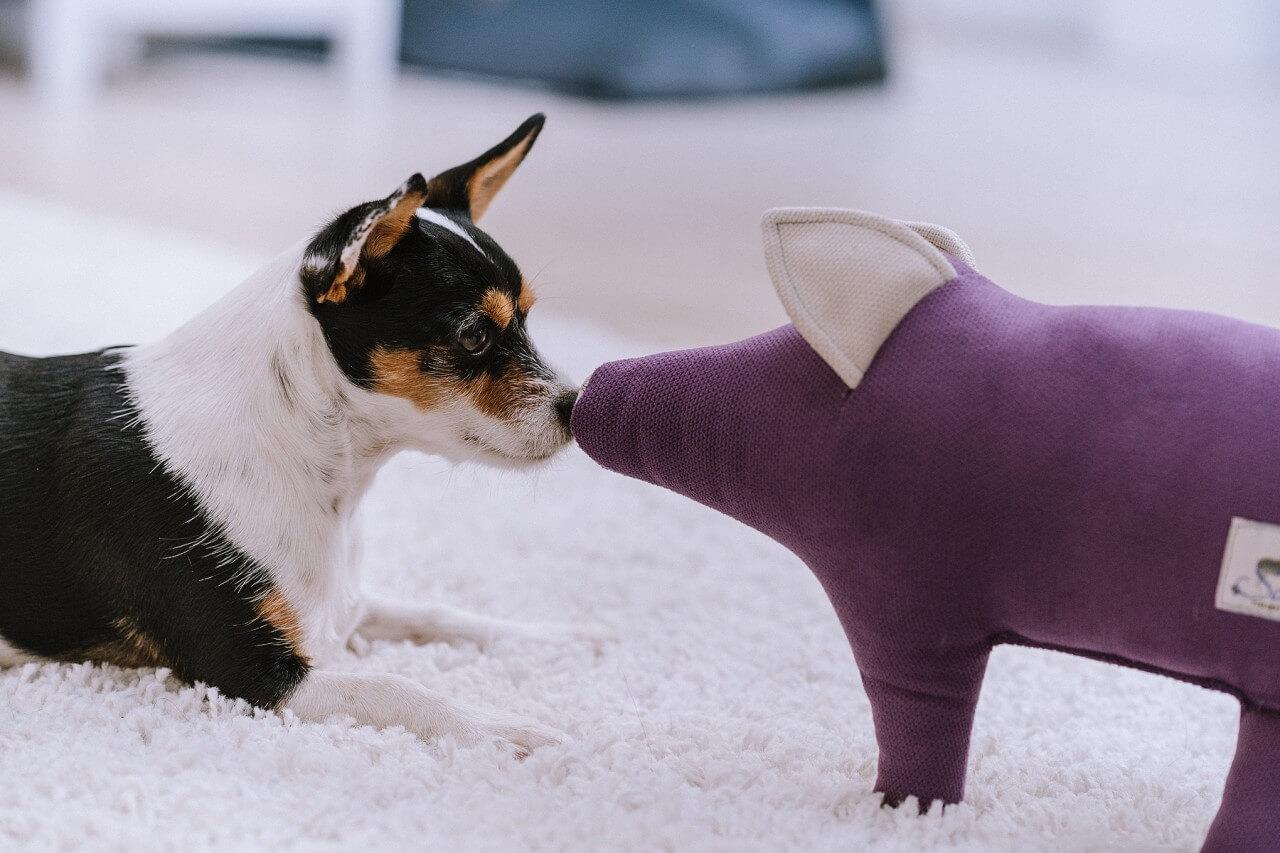 Schwein Dörte