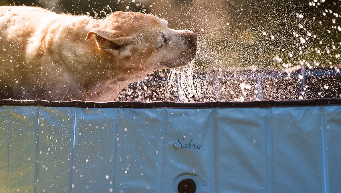SABRO Pool mit Hund