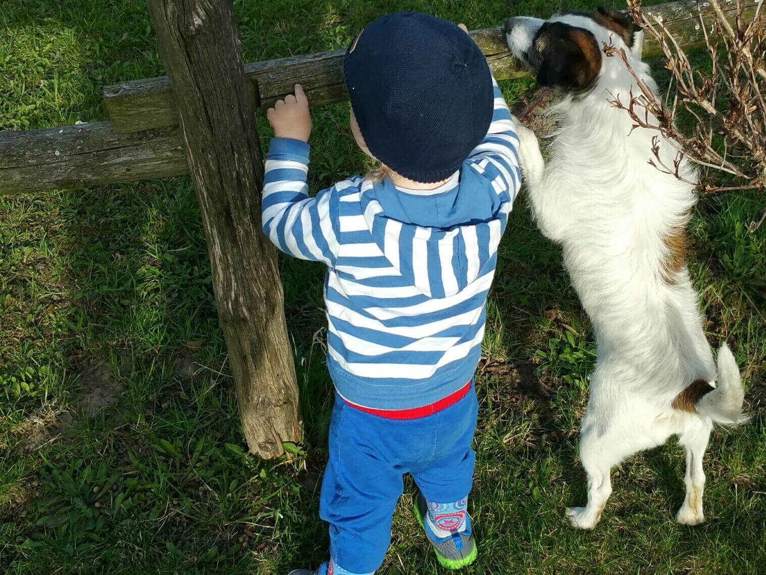 Gebote für Kinder mit Hund