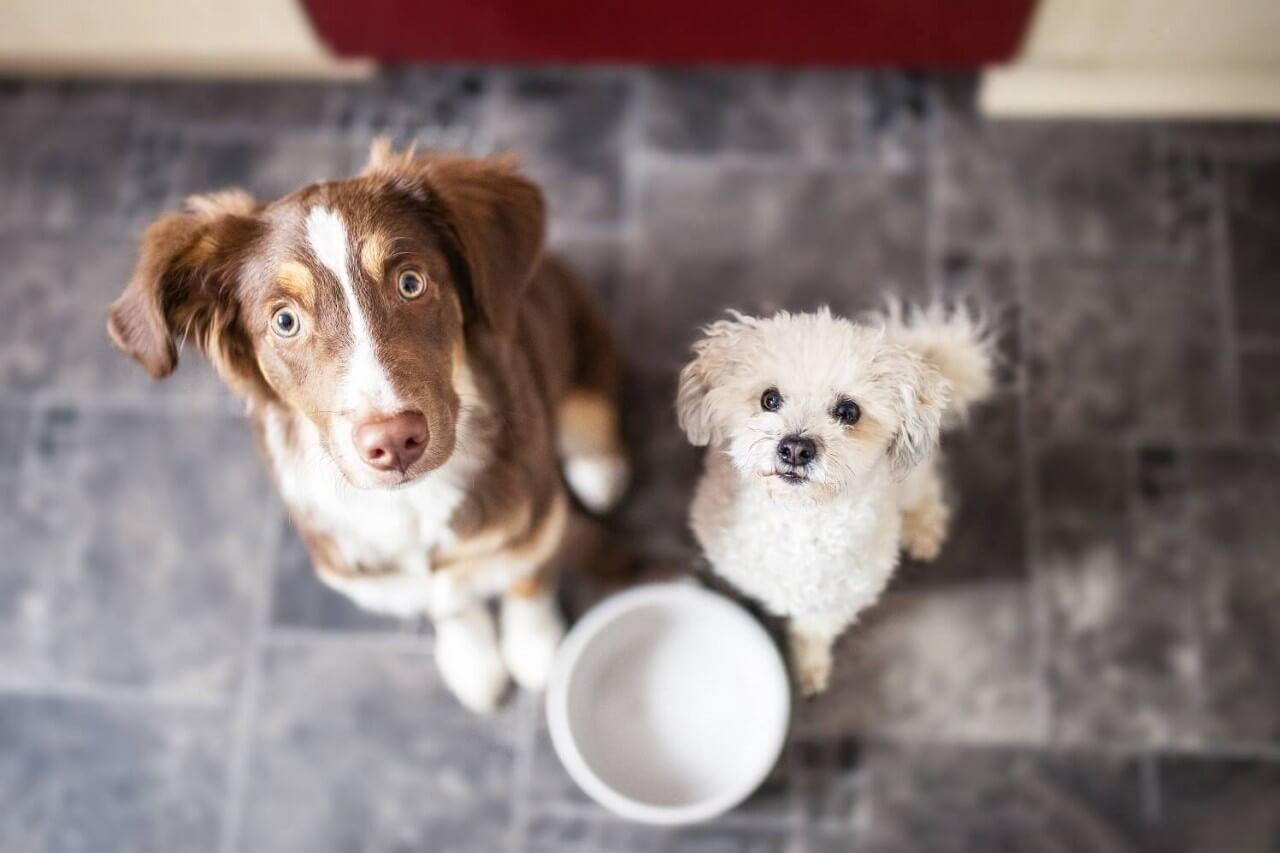 VOM Hundefutter Testpaket (6x 500gr)