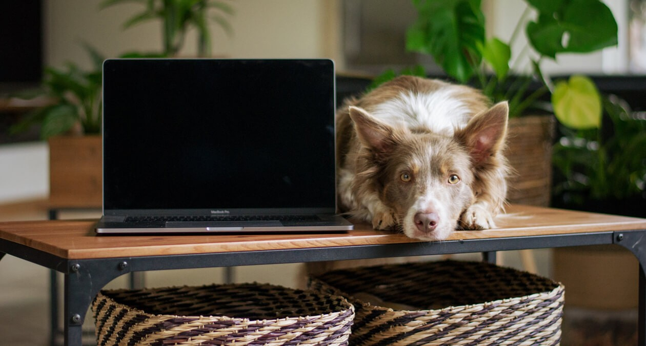 Home_Office_mit_Hund_1