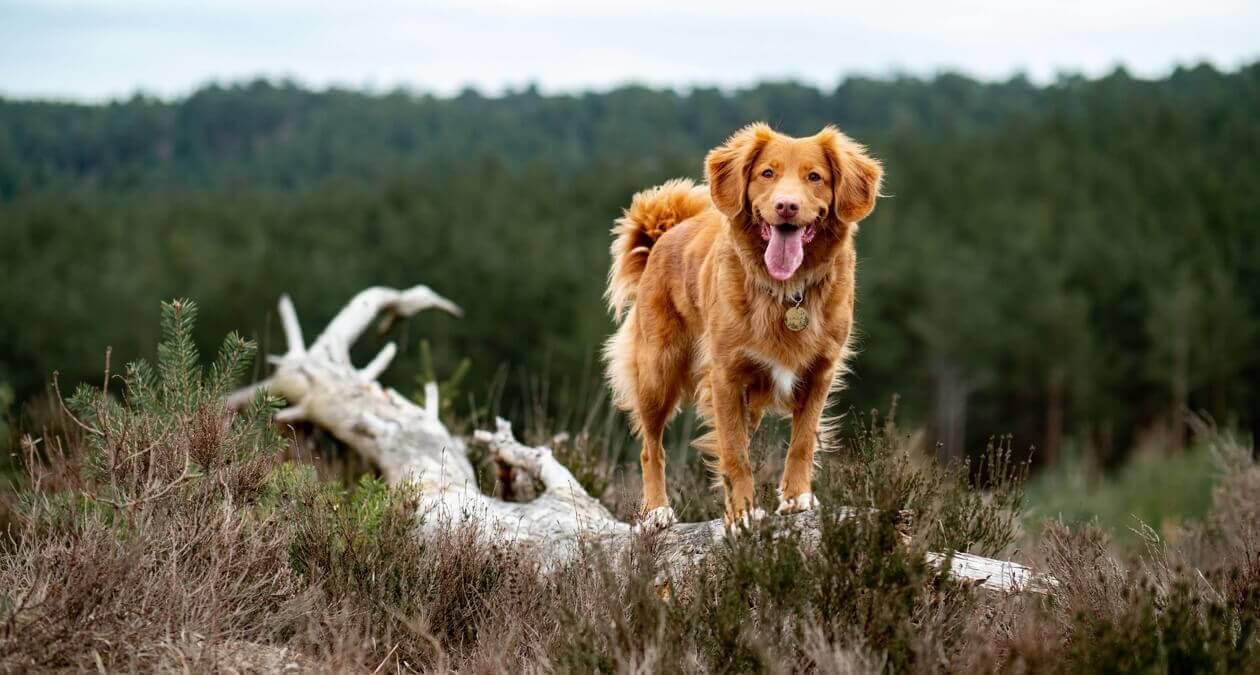 Wandern_mit_Hund_2