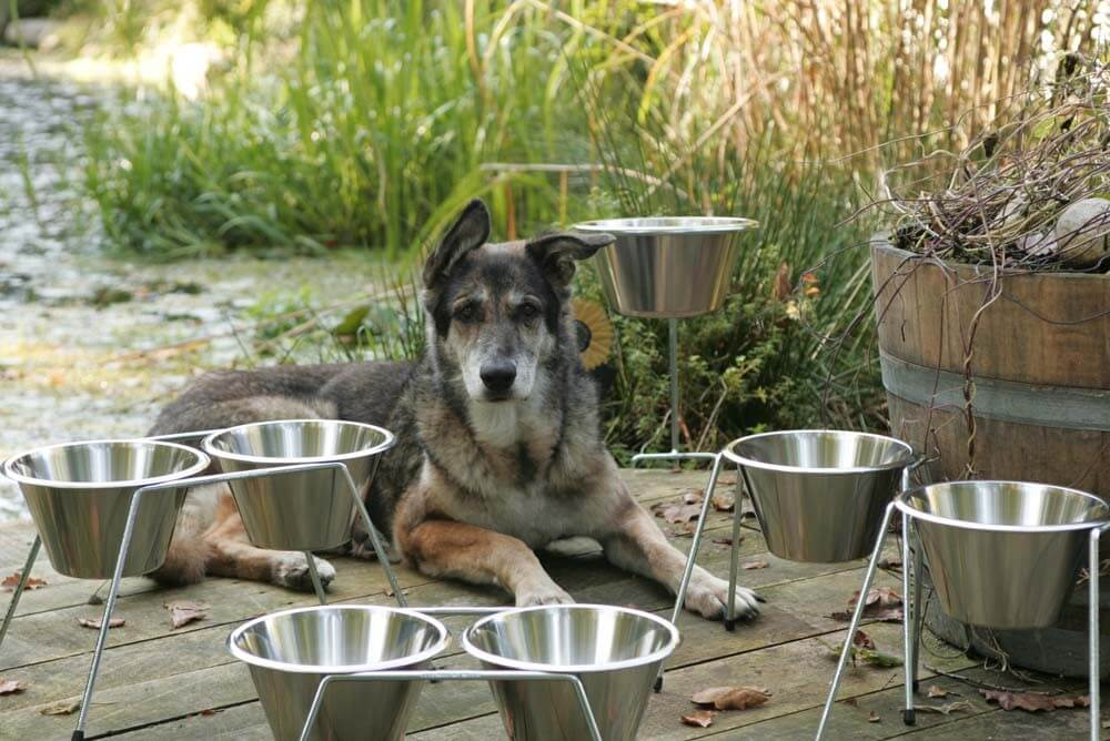 Hundeschüssel Lexi