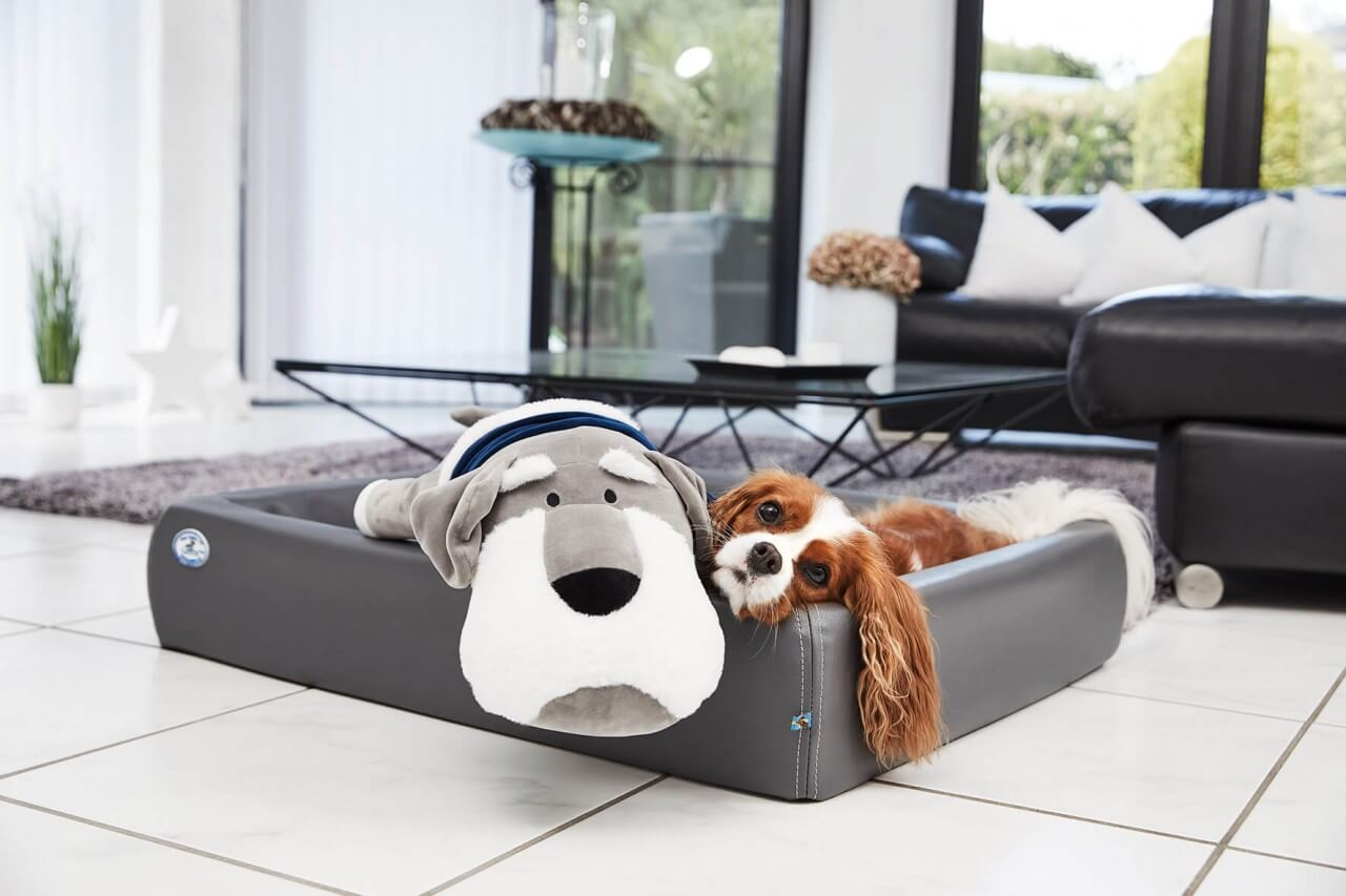 Ankuschelhund Theo