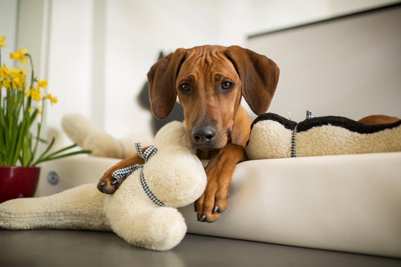 Hunde Ankuschelhund Tomte Spielzeug