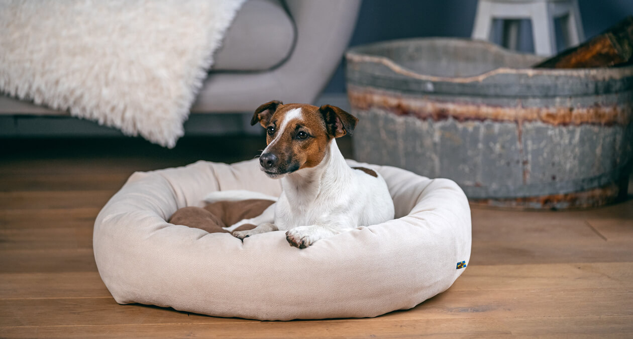 Die richtige Fellpflege für kurzhaarige Hunde