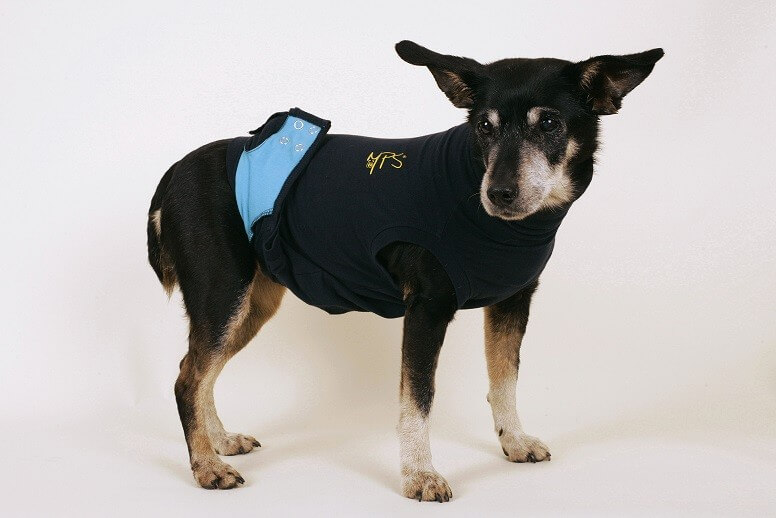 Medizinischer Hunde-Body
