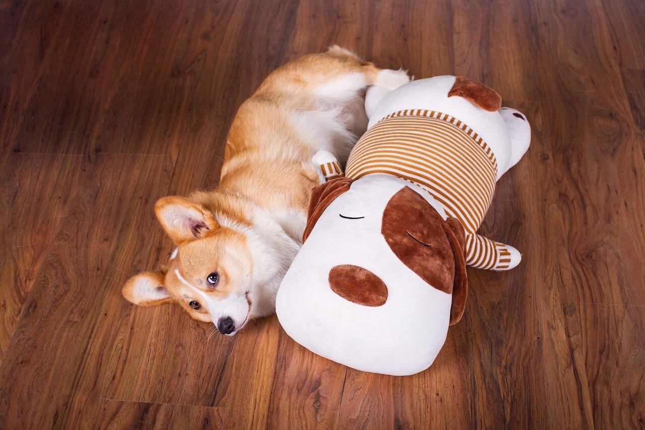 Ankuschelhund Tobi